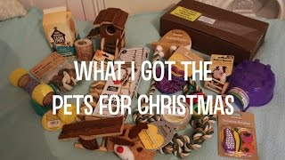 What I Got The Pets For Christmas  VioVet & Amazon