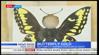 A group of farmers benefit from butterfly farming
