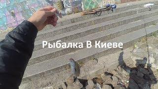 Рыбалка в киев места для рыбалки на днепре