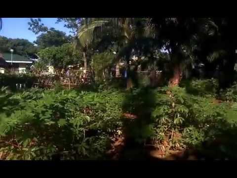 Panikel salad pagkain na may mga larawan bago at pagkatapos ng