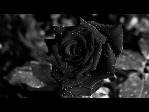 Черные розы. Как сделать чёрную розу в домашних условиях самостоятельно?