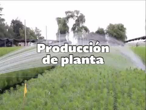 Cuenta edomex con 15 viveros para producci n de planta for Viveros forestales conafor