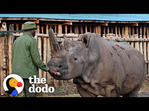 Meet the Two Last Surviving White Rhinos On Earth