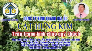 Karaoke: GIỌT ĐẮNG MEN TÌNH    Dây Đào   Tác Giả: Nguyễn Hữu Nghĩa