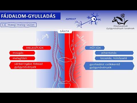 Tinktúrák artrózis kezelésére