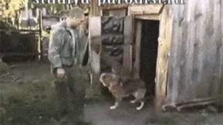 Собака Жириновского