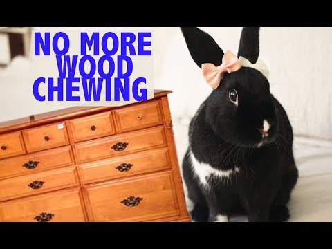 , title : 'Stop your Bunny from Chewing your Wooden Furniture :  HACK