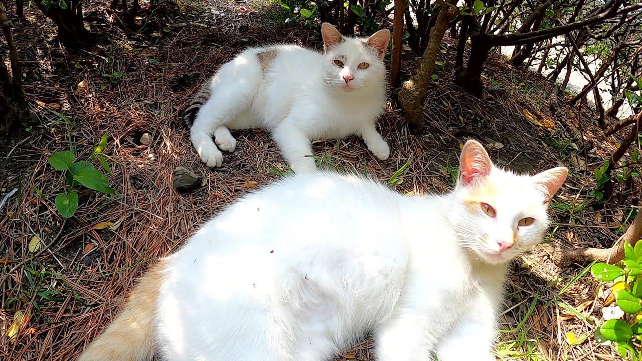 植込みを覗くと、フワフワの猫達が日向ぼっこをしていた