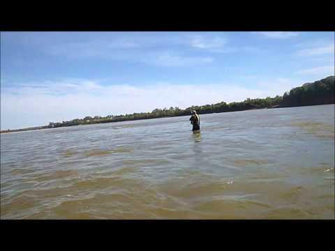 Dorado pescado en Salto Chico Concordia Entre Rios