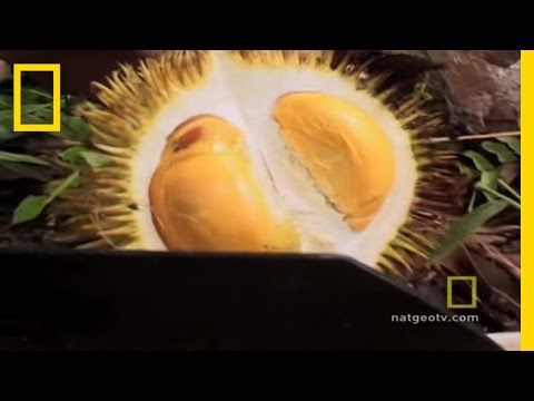 Funky Smelling Fruit | National Geographic