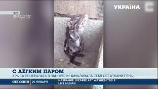Крыса принимает душ: житель Перу снял видео