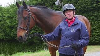 How to Lead a Horse Up in Hand