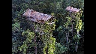 Suku di Papua ini tinggal di rumah pohon tertinggi di dunia, 50 meter