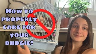 Parakeet Care  How to take care of a Budgie!
