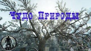 Skyrim►Чудо Природы►Святилище Великого Древа►Прохождение