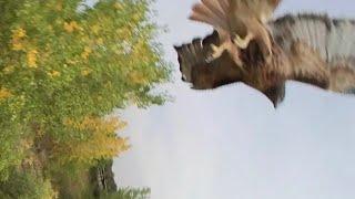 EMAX TinyHawk II Freestyle FPV HD: Hawk Encounter
