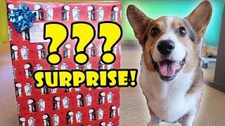 CORGI Xmas SURPRISE OPENING 50+ DOG Presents || Life After College: Ep. 578 | Kholo.pk