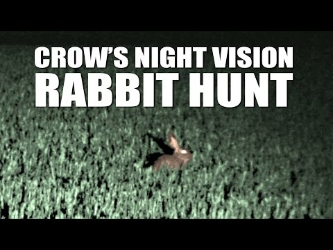 Crow's night vision rabbit hunt