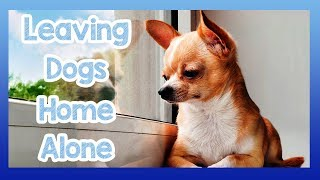 Tips on How to Keep a Dog Home Alone! Training Your Dog to be Home Alone Without a Problem!