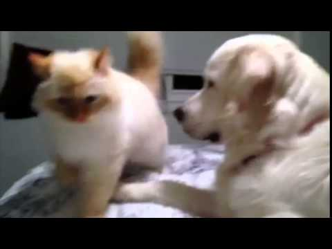 0 Dog Pushes Cat Off Bed