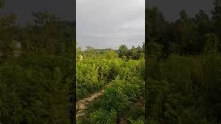 preview picture of video 'Iran Rasht. Lahijan Mount Bijar'