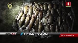 Мужчина сетями выловил более 27 килограммов рыбы. Зона Х