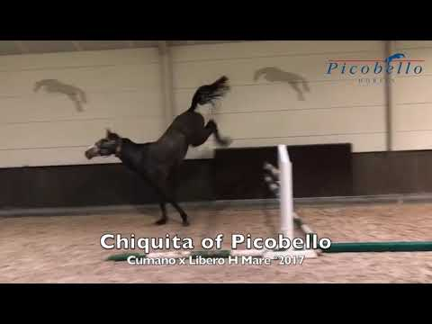 Mother Chiquita of Picobello Z