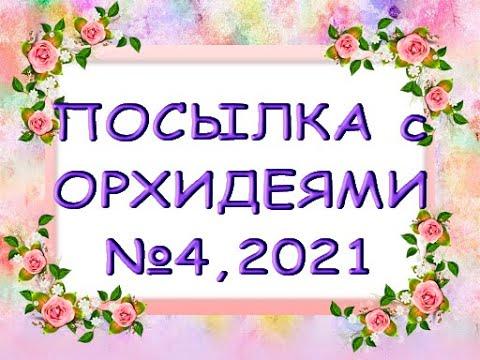 ПОСЫЛКА с новыми ОРХИДЕЯМИ в коллекцию!Посылка с орхидеями №4,2021.
