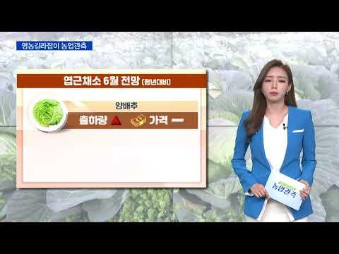 [영농길라잡이 농업관측] 엽근채소, 양념채소 6월 관측 이미지