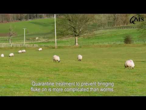 Citrocept parazita kezelés