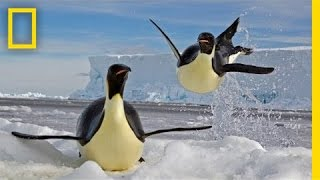 Paul Nicklen: Emperors of the Ice | Nat Geo Live