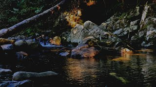 RIVER SOUNDS in Forest & DARK SCREEN at 1 Hour, Sound of River to Relax, Study, Sleep. Stream Sounds
