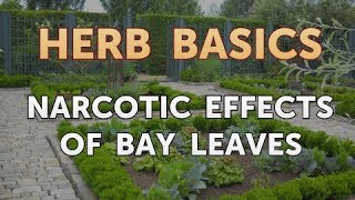 Narcotic Effects of Bay Leaves