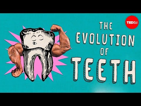 This is How Teeth Evolved