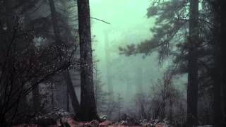 Scary Forest Sounds