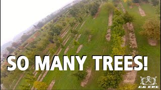 SEE THE FOREST FOR THE TREES - New Spot #freestyle #fpv