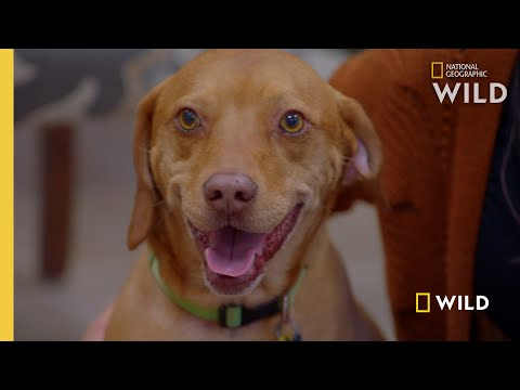 Replacing a Dog's Prosthetic Limb | Wizard of Paws