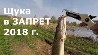 Рыбалка в запрет на щуку. Май 2018