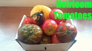 Heirloom Tomato Comparison - Weird Fruit Explorer Ep. 184