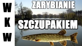 preview picture of video 'Zarybianie szczupakiem - Zalewy Kazimierza Wielka'