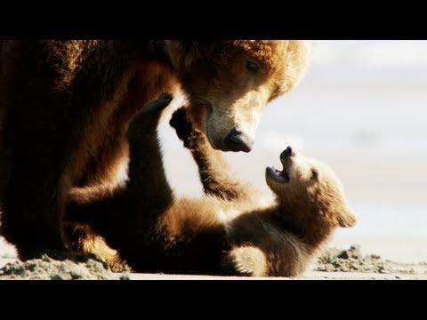 Medvék online