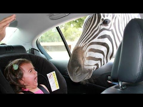 סרטון מצחיק על מפגשי חיות וילדים בפינות החי
