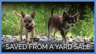 Priceless: Mama Dog and Son Abandoned at Yard Sale Meet New Family