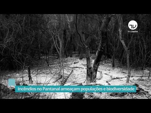 Incêndios no Pantanal ameaçam populações e biodiversidade – 02/10/20
