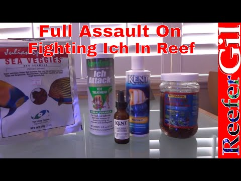 Video Ich Treatment In Reef Tank
