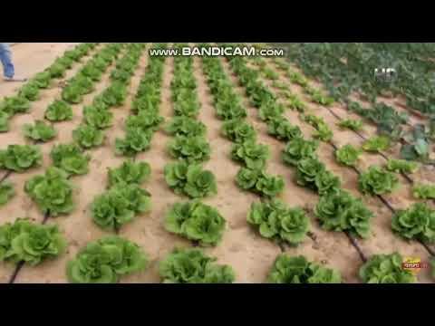 কুয়েতের মরু অঞ্চলে লাল-সবুজের একটুরো বাংলাদেশ