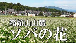 箱館山山麓のソバの花【びわ湖源流の郷・高島市より】