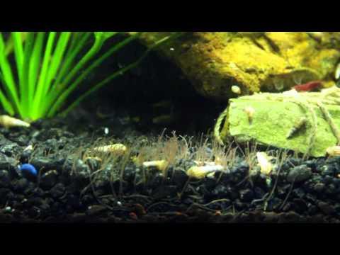Ay nangangahulugan ng worm para sa mga bata mula sa 1 taon