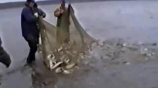 Ловля омуля на енисее