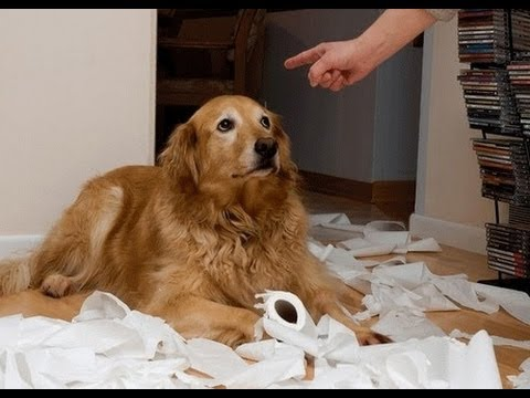 Funny Guilty Dogs Compilation 2013 [HD]